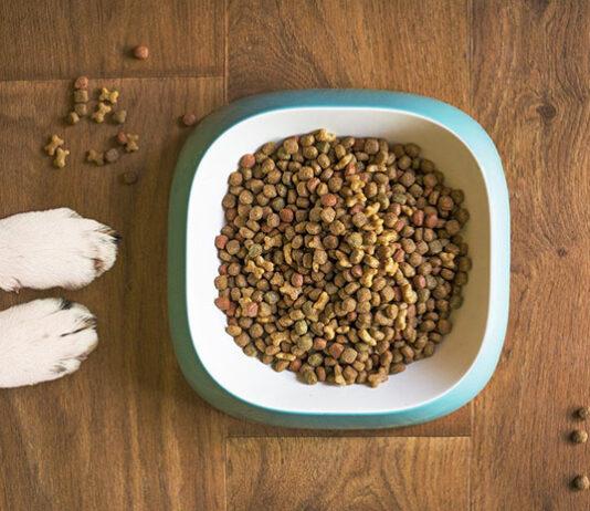 W jaki sposób karmić psa